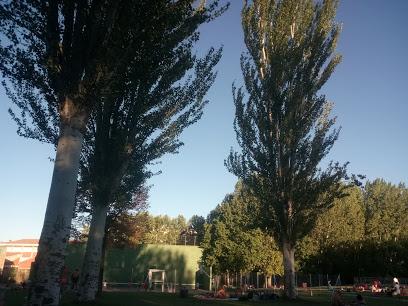 Sports Facilities El Prado