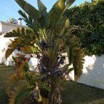 Gimnasio Palmový Háj  Torremolinos